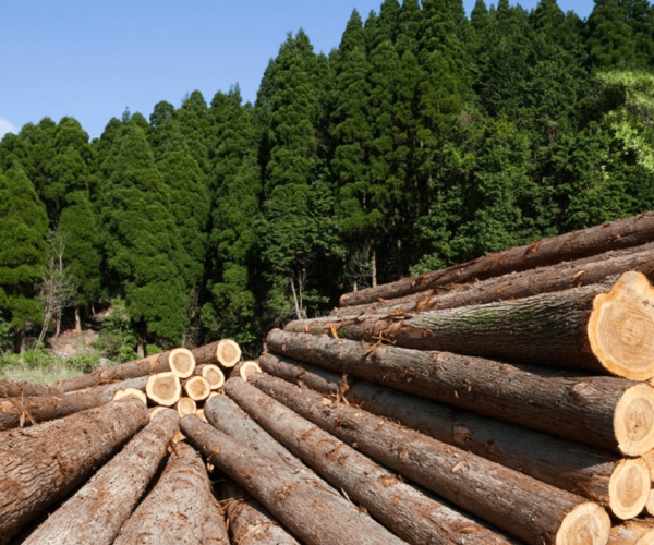 http://new.caselandco.com/wp-content/uploads/2019/05/forestry-1-2-600x500.png